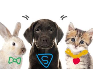 Animalis change toutes ses solutions technologiques @clesdudigital