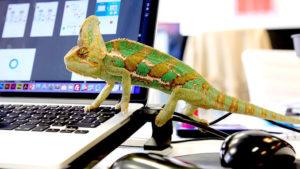 Contentsquare et Kameleoon associent leurs technologies @clesdudigital